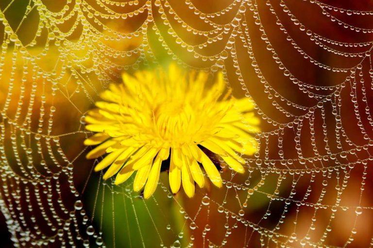 kapky a květ