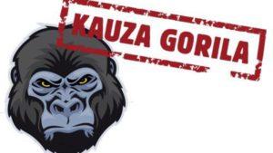 gorila kauza