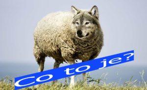vlk-ovce-j co to je
