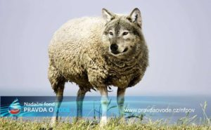 vlk-ovce-jnf